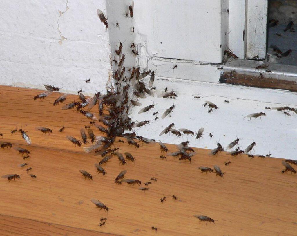 Dieses Bild hat ein leeres Alt-Attribut. Der Dateiname ist Ameisen-1024x815.jpg